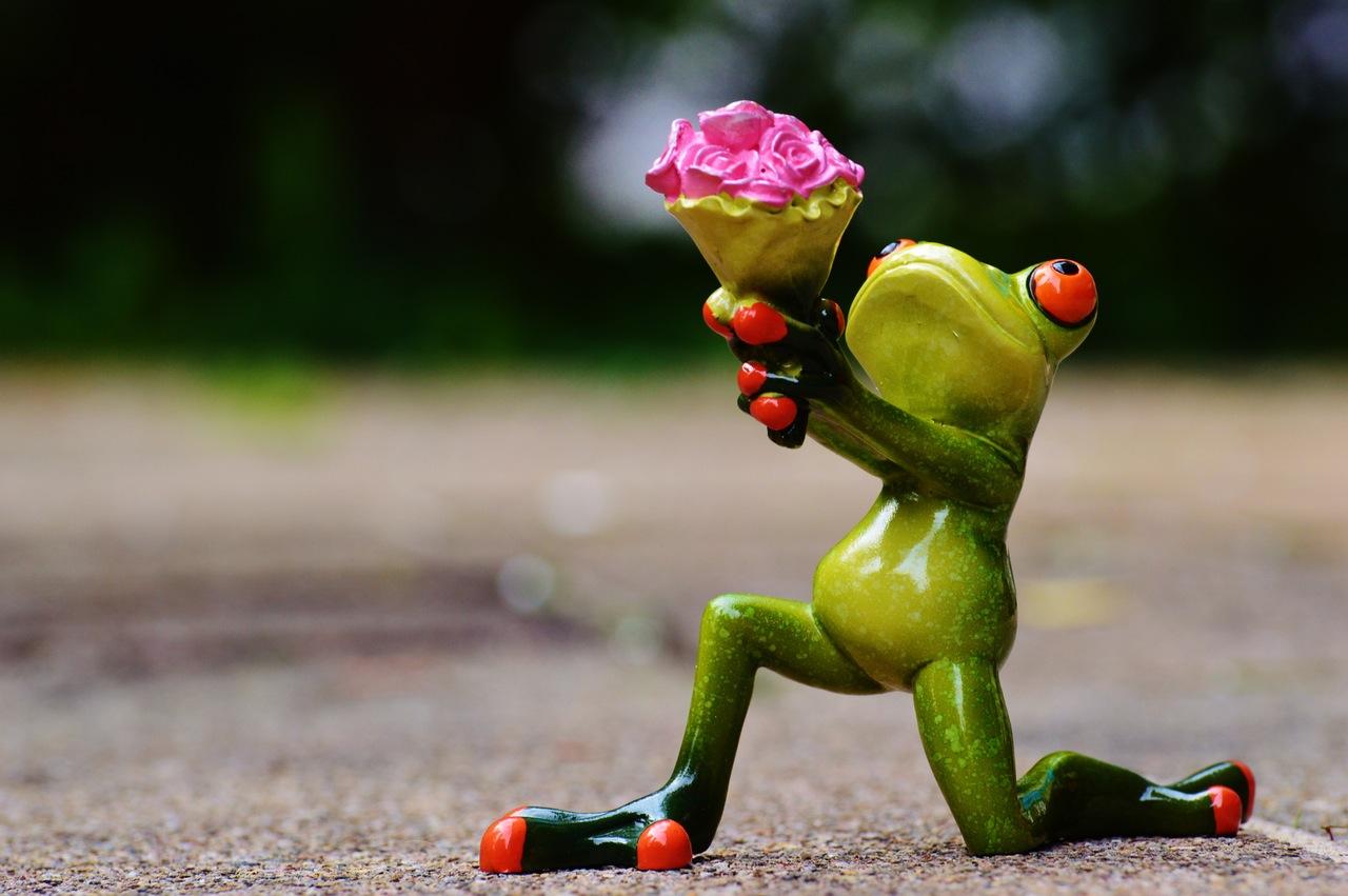 i-beg-your-pardon-excuse-me-frog-sweet.jpg